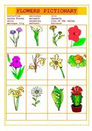 flowers pictionary drill esl worksheet by vivanglais. Black Bedroom Furniture Sets. Home Design Ideas
