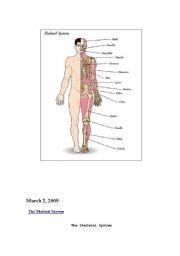 English Worksheets: The Skeletal System