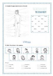 English Worksheet: Human body + symptoms