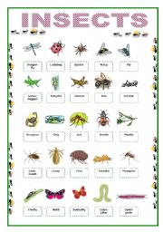 English Worksheet: Insects Picture Vocabulary