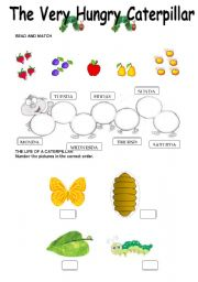 English Worksheet: The Very Hungry Caterpillar - Worksheet -