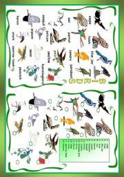 English Worksheets: Birds