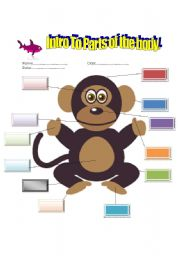 English Worksheets: Intro To Parts Of The Body