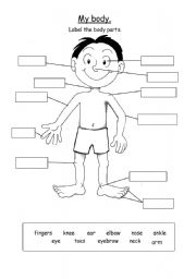 ESL worksheets for beginners: My body parts