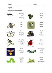 English Worksheets: Bugs 5