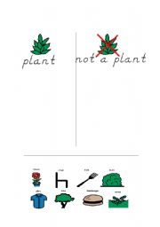 English Worksheets: PlantSorting