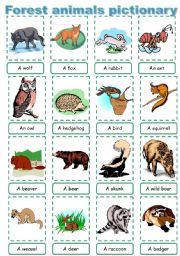 English Worksheet: Forest animal pictionary