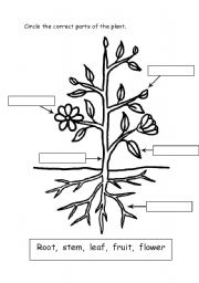 English teaching worksheets: Parts of a plant