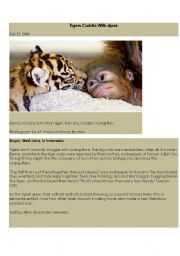 English Worksheets: tigers cuddle with apes