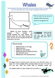 English Worksheet: Whales