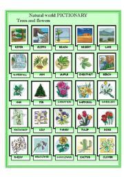 English Worksheet: The natural world - Plants and Trees Pictionary