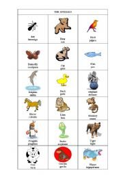 English Worksheets: Animals2