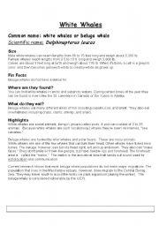 English Worksheet: White Whales
