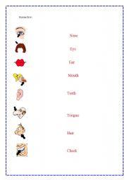 English Worksheets: Human face