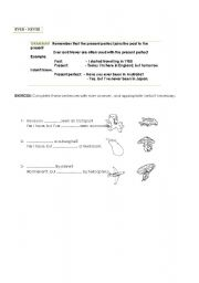English Worksheets: EVER - NEVER