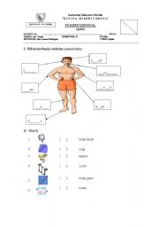 English Worksheet: Parts of the body / Cleaning objects