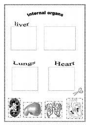 English Worksheet: Internal organs