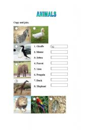 English Worksheets: Copy and Label