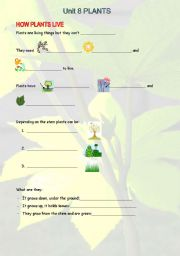 English Worksheet: SCIENCE UNIT 8. 2ND GRADE. PLANTS.