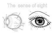 English Worksheets: The senses (1): the sight
