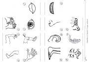 English Worksheets: body parts minibook