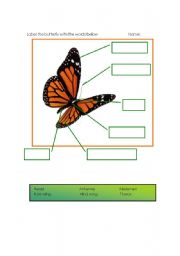 English Worksheets: butterfly