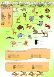 English Worksheet: ANIMALS - parts of the body, name of female & male, young