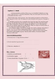 English Worksheets: Comprehension passage about Butterflies.
