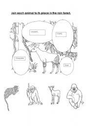 english worksheets rain forest animals. Black Bedroom Furniture Sets. Home Design Ideas