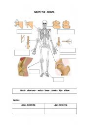 English Worksheets: The joints