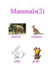 English Worksheets: Mammals (2)