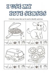 English Worksheet: I use my FIVE SENSES