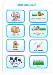 English Worksheets: WHAT ANIMALS EAT  4/4