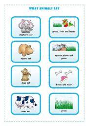 English Worksheets: WHAT ANIMALS EAT  4/4