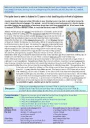 English Worksheets: Polar Bear Shot Dead  (advanced)
