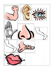 English Worksheets: Body Parts Flashcards