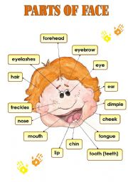 English Worksheets: PARTS OF FACE - CLASSROOM POSTER