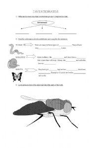 English Worksheets: Invertebrades