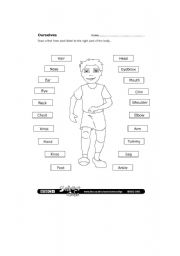 English Worksheets: The total Body