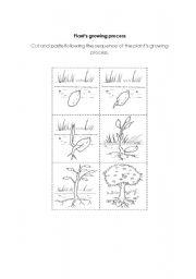 English worksheet: plant´s growing process