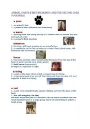 English Worksheets: animal parts,sounds and idioms(7 pages)