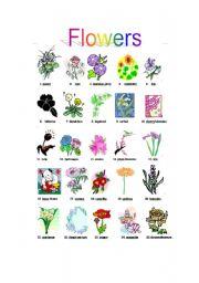 English Worksheet: flowers