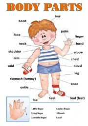 English Worksheet: BODY PARTS CLASSROOM POSTER!