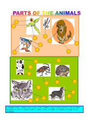 English Worksheets: PARTS OF THE ANIMALS-Matching