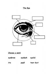 Parts of the Eye Worksheet by benmarshall939 - Teaching Resources ...