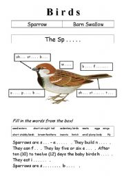 English Worksheet: Birds