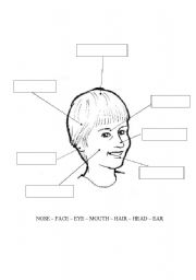 English Worksheets: face