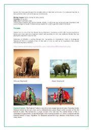 English Worksheets: Elephant ( part 2 )
