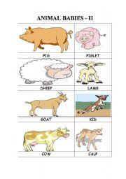 ANIMAL BABIES - II
