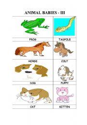 English Worksheets: ANIMAL BABIES - II